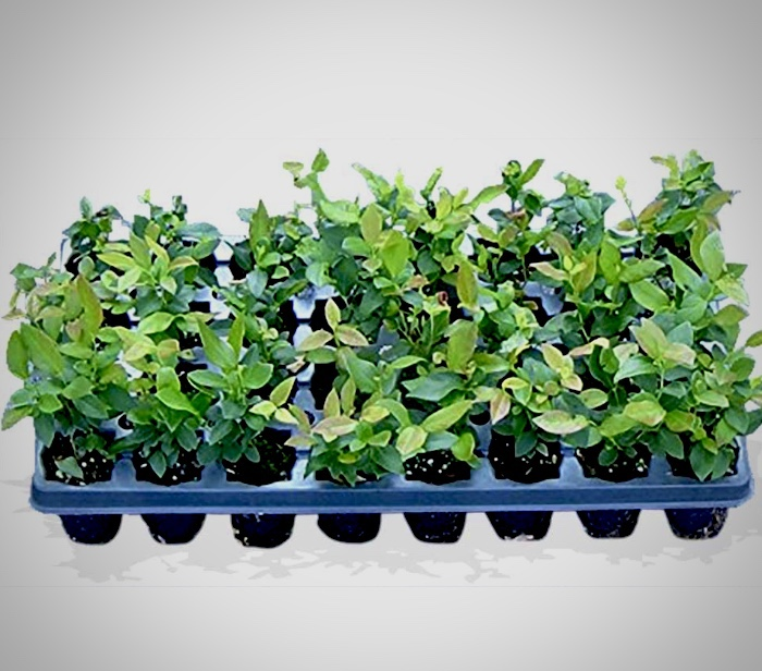tray of plant seedlings